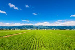 市街化区域内の農地を転用する方法と最適な活用法の見極め方