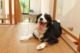 大型犬のイメージ