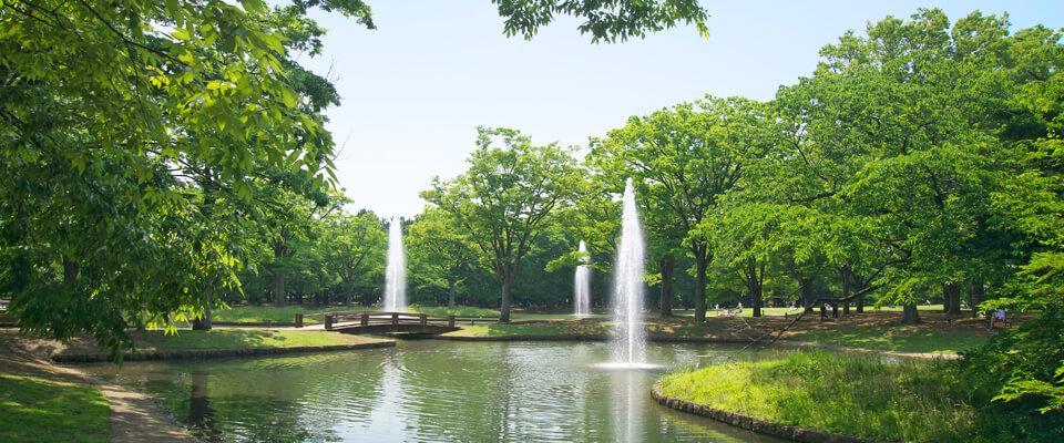 代々木公園のイメージ